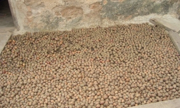 Drying of raw sheanut